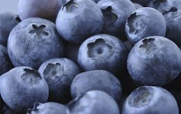 Tasmania's area freedom from blueberry rust recognised