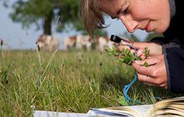 The importance of pest surveillance